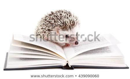 Hedgehog And Book Stock photo © derocz