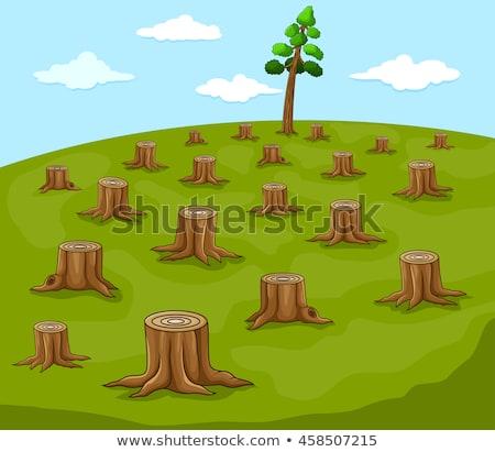 árvore · cortar · para · baixo · textura · grama · madeira - foto stock © rghenry