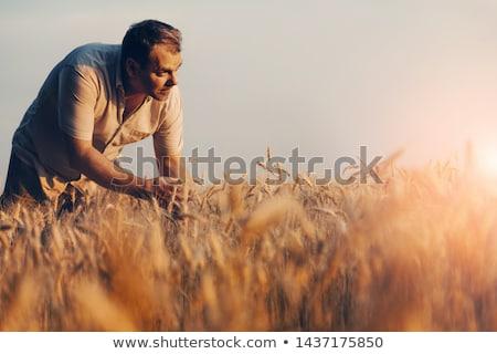 области проверить ушки стороны человека кукурузы Сток-фото © justinb