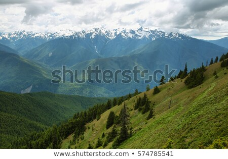 Stock photo: Alpine Meadow Wildflowers Hurricane Ridge Olympic Mountains