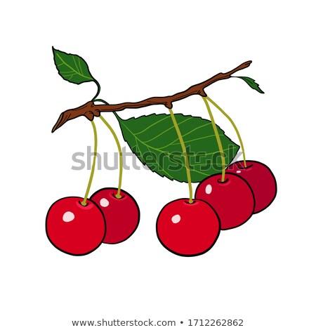 Stock photo: cherry fruits tree