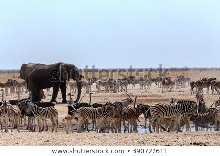 crowded waterhole with elephants zebras springbok and orix stock photo © artush
