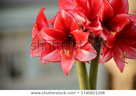Dupla virágok virágcsokor piros rózsaszín fény Stock fotó © compuinfoto