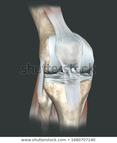 Humaine genou illustration médecin fond Photo stock © bluering