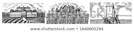 Stock photo: rural landscape of grape field