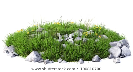 Natural grass arena with flowers Stock photo © cherezoff
