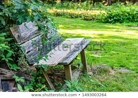 древесины · скамейке · осень · зеленый · парка · погода - Сток-фото © massonforstock