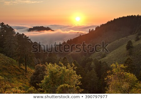 Chaparral Sunset Stock photo © yhelfman