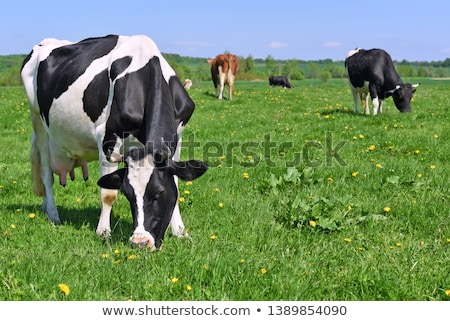vetor · estilo · ilustração · vaca · isolado · verde - foto stock © curiosity