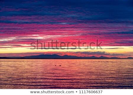 Dramatik gün batımı renkler huş ağacı yoğun renk Stok fotoğraf © davidgn
