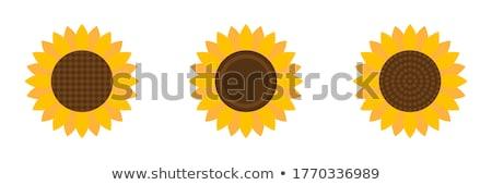 Növényvilág absztrakció ikon stílus grafikus szürke Stock fotó © ahasoft