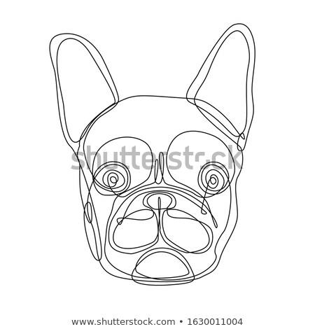 French Bulldog Head Continuous Line Stock photo © patrimonio