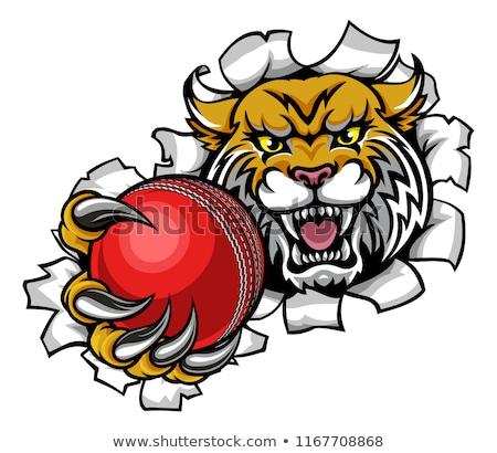 aslan · kriket · top · spor · maskot · öfkeli - stok fotoğraf © krisdog