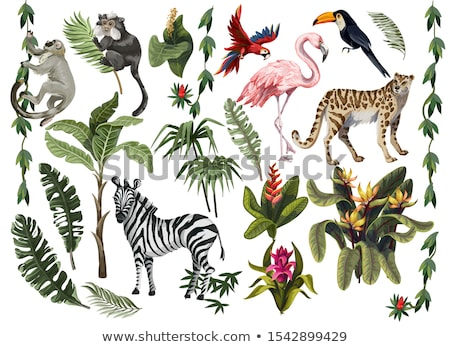 set of forest wild animals isolated on white background stock photo © marysan