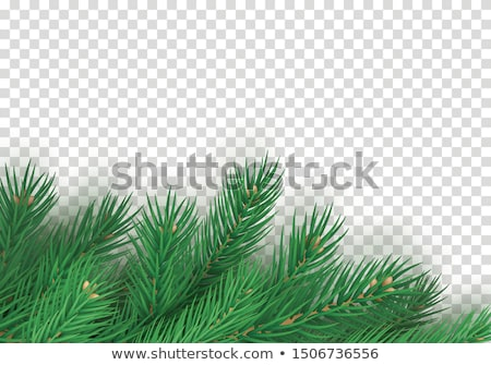 зеленый ель веточка прозрачный Рождества прибыль на акцию Сток-фото © limbi007