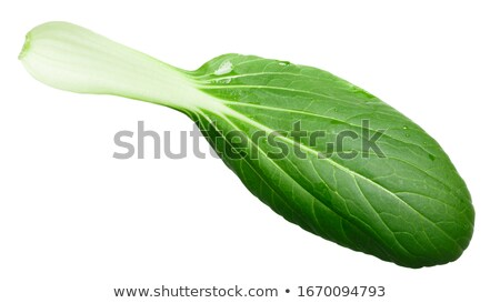 Baby bok choy chinese chard, top Stock photo © maxsol7