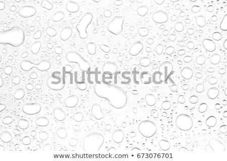 Black and white water drops  Stock photo © szefei
