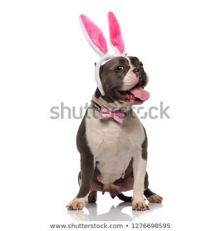 élégant lapin de Pâques oreilles pants blanche Photo stock © feedough