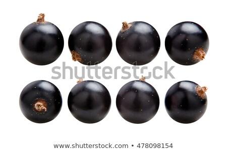 sprig of black currant Stock photo © studiostoks