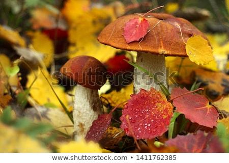 two mushrooms with autumn leaves stock photo © mayboro