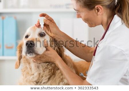 Tıp göz köpek fransız buldok doktor Stok fotoğraf © OleksandrO