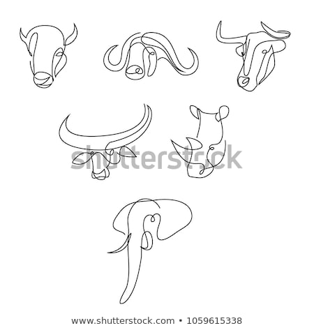 African Buffalo Continuous Line Stock photo © patrimonio