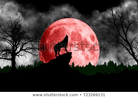 halloween full moon on red sky scary background Stock photo © SArts