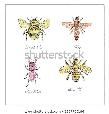 Pszczoła osa beetle królowej vintage kolekcja Zdjęcia stock © patrimonio