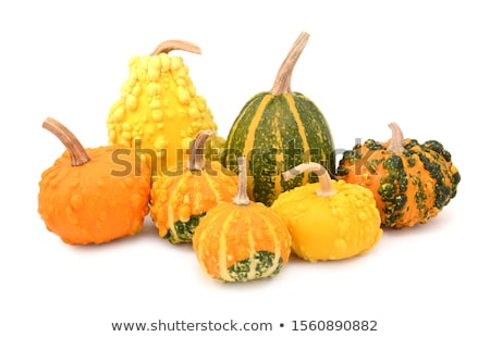 Sept couleurs squash blanche Photo stock © sarahdoow