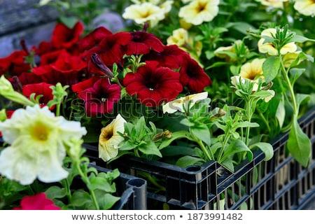 Scatole piantine fiori outdoor nero Foto d'archivio © Illia