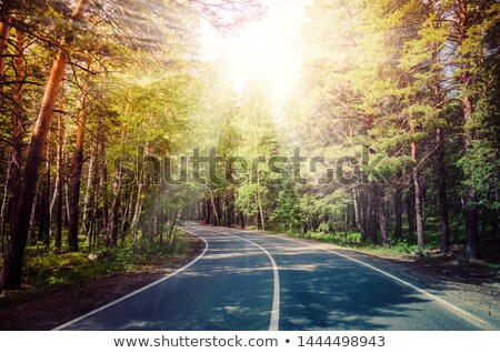 Beautiful autumn forest, winding road in it. Stock photo © justinb