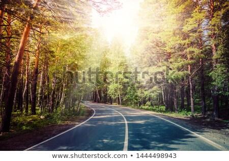 estrada · de · cascalho · floresta · fresco · verde · primavera - foto stock © justinb