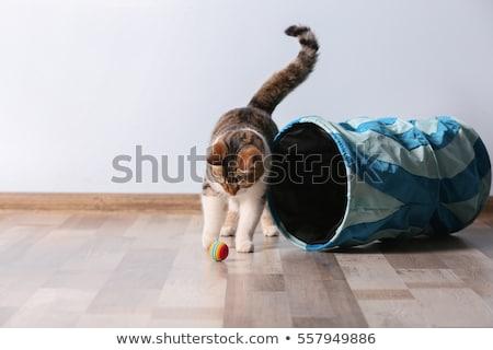 spelen · kat · mooie · blond · meisje · bed - stockfoto © PetrMalyshev