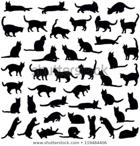 kediler · siluetleri · ayarlamak · beyaz · grup · siluet - stok fotoğraf © kaludov