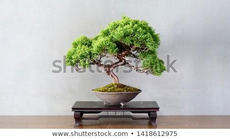 Oude japans bonsai pot keramische geïsoleerd Stockfoto © taviphoto