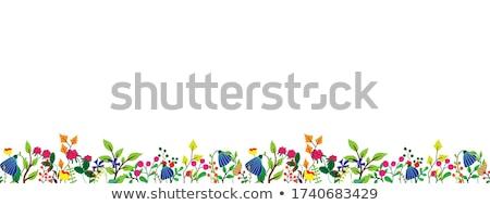 葉 黒白 画像 葉 地上 背景 ストックフォト © pancaketom