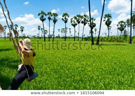 Foto stock: Balançar · conjunto · fazenda · campo · vintage · agricultura