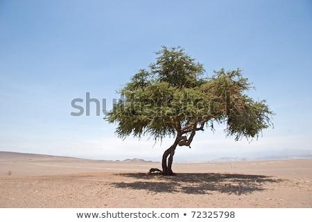 woestijn · boom · rand · afstandsbediening · australisch - stockfoto © iTobi