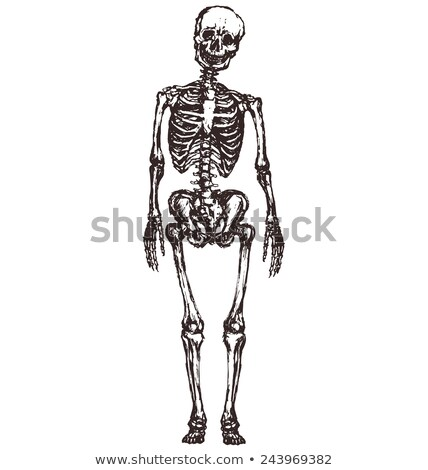 Skeleton Standing - Pencil Drawing Style Stock photo © AlienCat