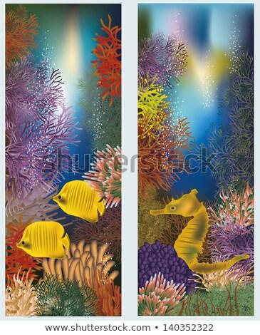 sualtı · dünya · iki · afişler · su · dizayn - stok fotoğraf © carodi