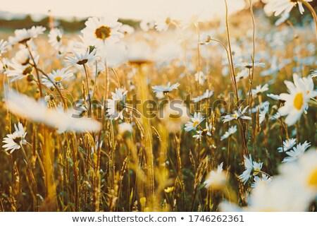 retro summer background with motley suns Stock photo © marinini