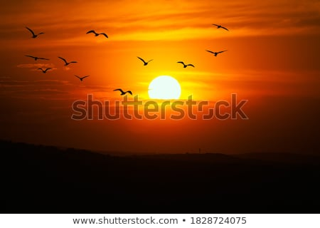 African sunrise stock photo © serendipitymemories