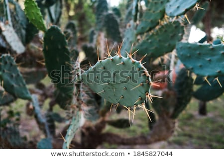 Bush green prickly cactus with spider web Stock photo © Discovod