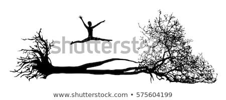 Zdjęcia stock: Wyschnięcia · drzewo · starych · wiosną · lasu · krajobraz