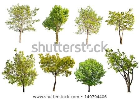 Kicsi zöld fa izolált fehér fa fű Stock fotó © tashatuvango