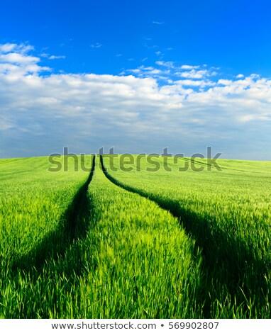 緑 麦畑 トラクター 歩道 食品 風景 ストックフォト © goce