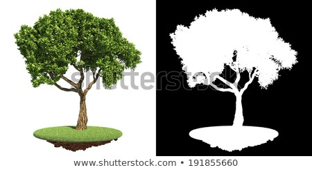 Nice Green Tree with Detail Raster Mask. Stock photo © tashatuvango