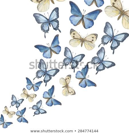 ストックフォト: 緑 · 色 · 水彩画 · 蝶 · 花 · 美しい