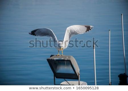 Martı iniş plaj gökyüzü güzellik kuş Stok fotoğraf © chris2766