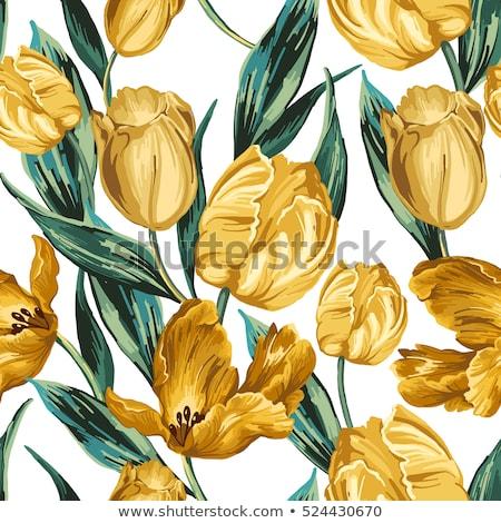 три · белый · тюльпаны · весенние · цветы · цветок - Сток-фото © svetography